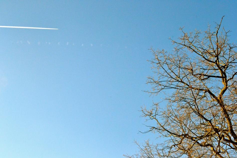 Blues skies